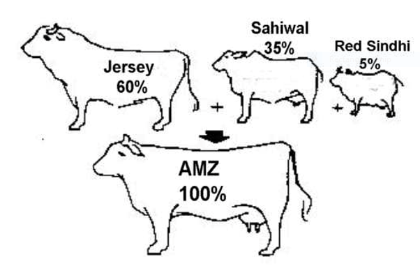 jersy-cow-pic