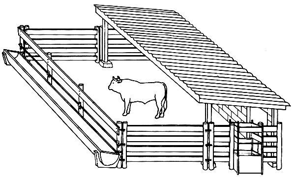 cow-housing-4-jpg