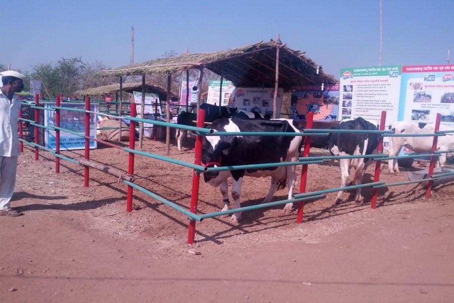 cow-housing-6